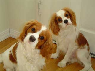 "<div class=""meta image-caption""><div class=""origin-logo origin-image ""><span></span></div><span class=""caption-text"">Michele: Jake and Roscoe just love to pose for the camera....say CHEESE !!!!</span></div>"