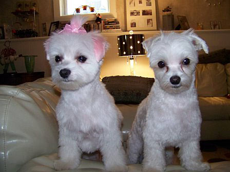 "Mary Jo Simunovich writes: ""Sophia Bella and Pippin wonder what they will be for Halloween?"""
