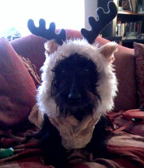 Magda: Jinxie the Reindeer!